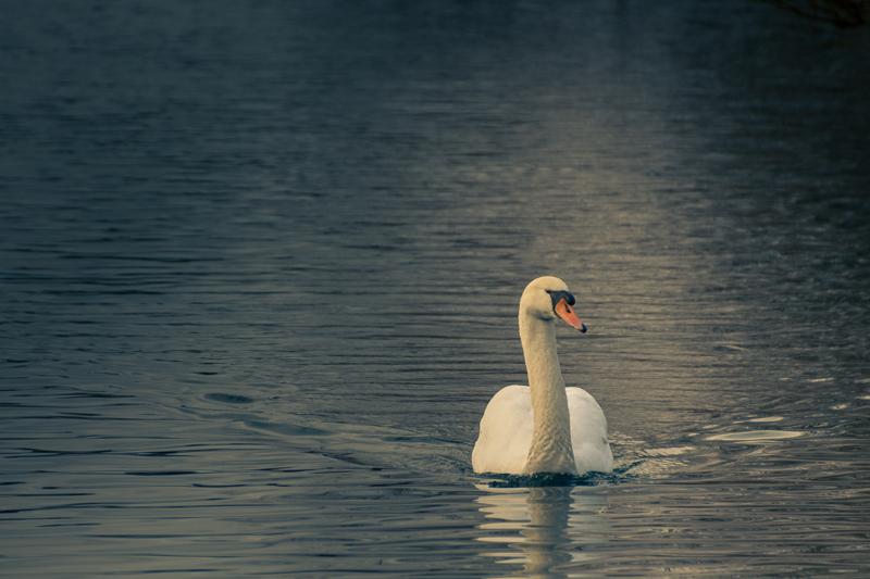 Der Herr des Sees